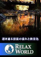 透き通る清流の流れと秋景色【RELAX WORLD】