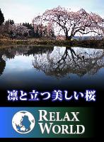 凛と立つ美しい桜【RELAX WORLD】