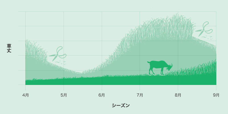 草丈のグラフ